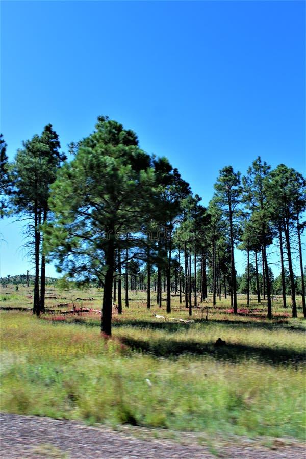 Fondo di giro della riunione di libertà della posta 86 della legione americana - allevatore in Arizona del Nord, Stati Uniti fotografie stock libere da diritti