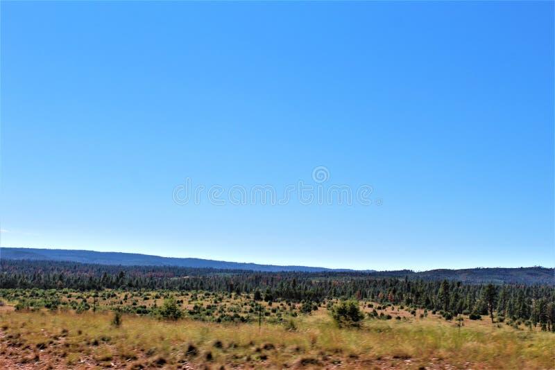 Fondo di giro della riunione di libertà della posta 86 della legione americana - allevatore in Arizona del Nord, Stati Uniti fotografia stock