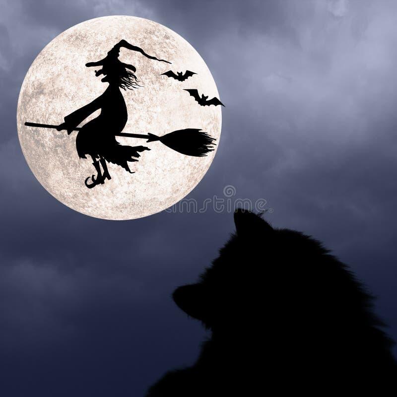 Fondo di Halloween con il gatto, i pipistrelli, la luna piena e la strega di volo fotografia stock