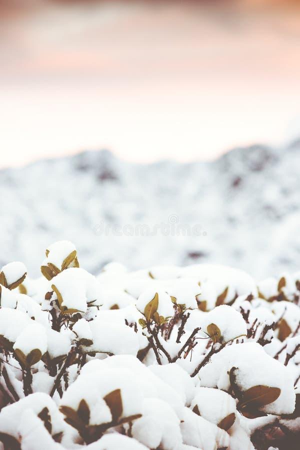 Fondo di inverno con i rami e le montagne della neve fotografia stock libera da diritti