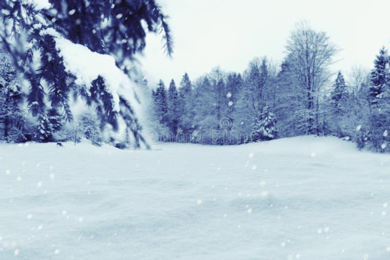Fondo di inverno con neve ed i pini Concetto di festa di Natale immagine stock