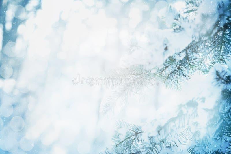 Fondo di inverno, rami dell'abete e bokeh nevosi vaghi fotografia stock