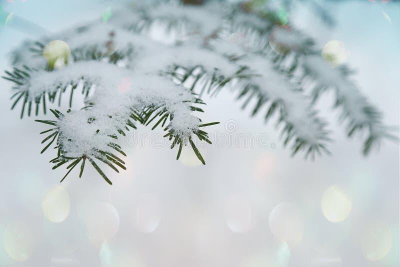 Fondo di inverno, rami dell'abete e bokeh nevosi vaghi fotografie stock