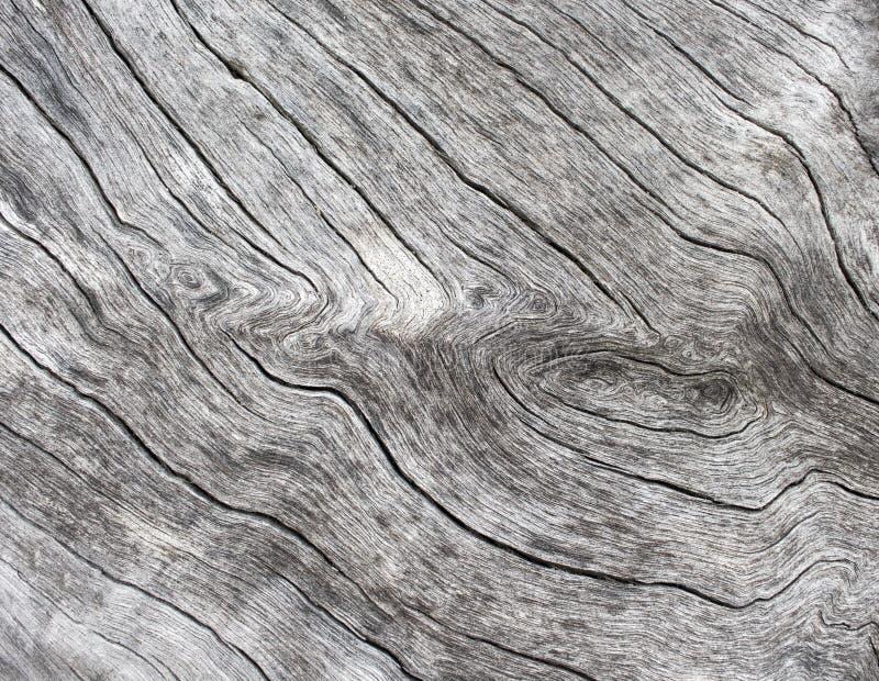 Fondo di legno d'argento Fine di legno di struttura sulla foto Vecchio albero bianco vicino al mare fotografia stock