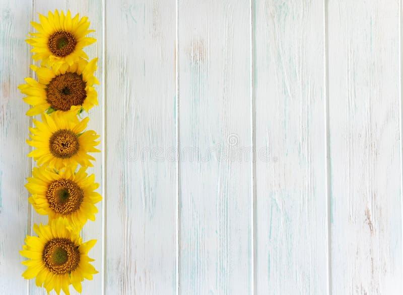 Fondo di legno della luce intensa di estate con i fiori dei girasoli dai lati Pagina per testo con i girasoli Cartolina d'auguri  immagine stock