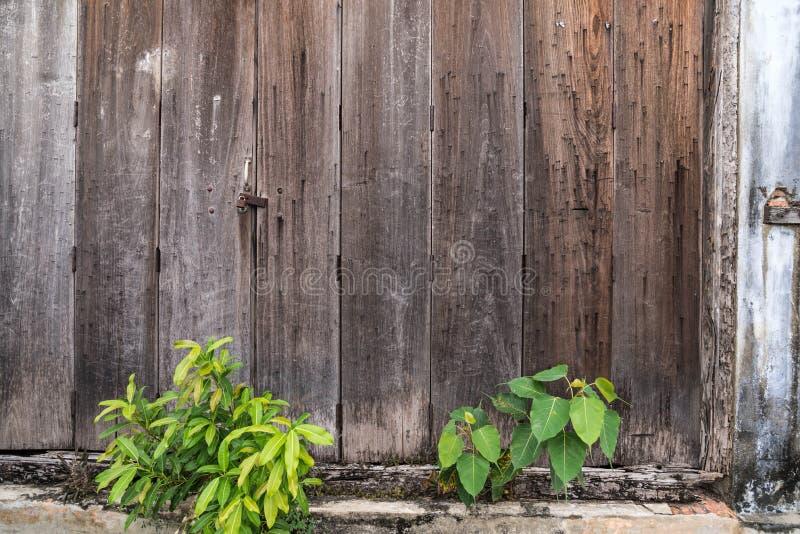 Fondo di legno della parete con gli alberi immagine stock