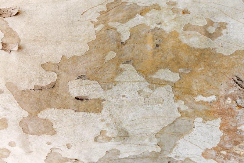 Fondo di legno della superficie di gray della castagna dell'albero naturale del modello fotografia stock libera da diritti