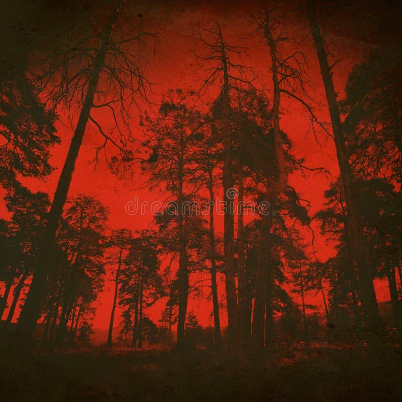 Fondo di legno diabolico di notte fotografia stock