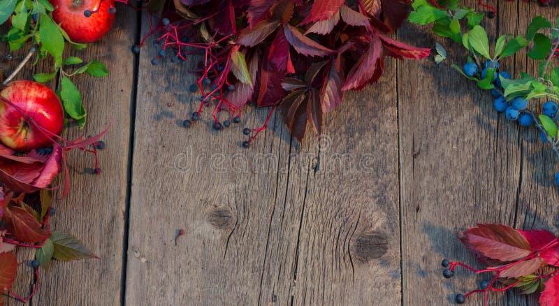Fondo di legno incorniciato dalle foglie, dalle mele e dal verde rossi di autunno immagine stock libera da diritti