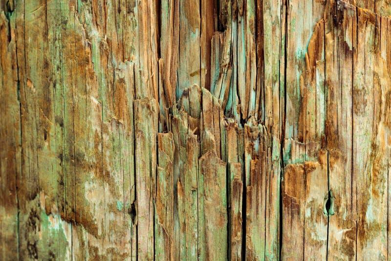 Fondo di legno stagionato, struttura d'annata naturale di lerciume con pittura delle tonalità sbiadite di verde blu, acqua e turc immagini stock