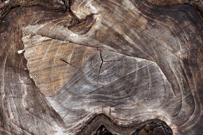 Fondo di legno Struttura di legno del tronco di albero tagliato, primo piano fotografie stock