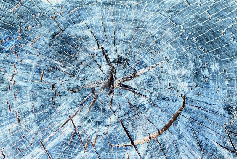 Fondo di legno di struttura, fine di legno della corteccia su nello stile di al neon o di negativo immagini stock libere da diritti