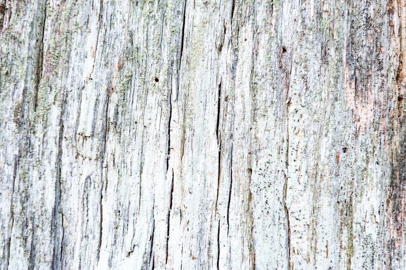 Fondo di legno strutturato incrinato approssimativo obsoleto stagionato fotografie stock libere da diritti