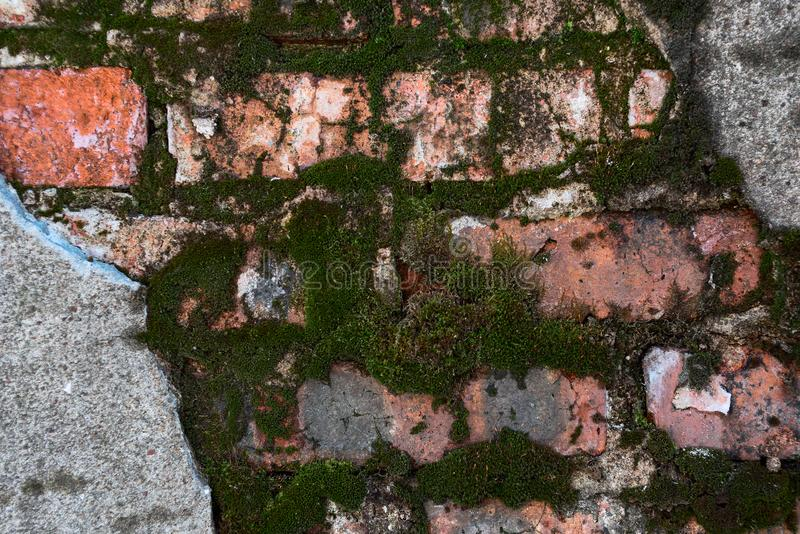 Fondo di muschio verde sui mattoni rossi di una costruzione abbandonata immagini stock