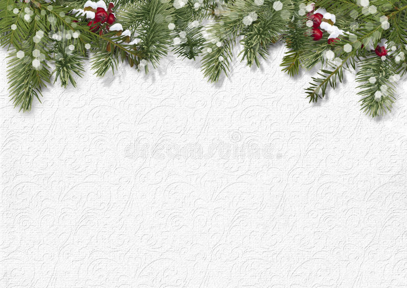 Fondo di Natale con agrifoglio, abete fotografie stock libere da diritti
