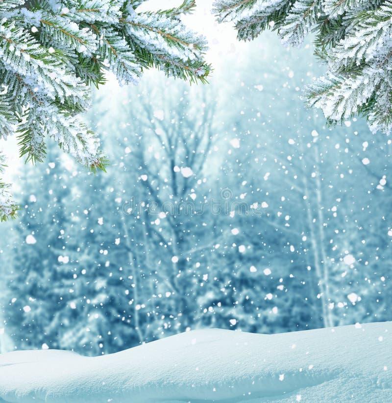 Fondo di Natale di inverno con il ramo di albero dell'abete immagine stock libera da diritti