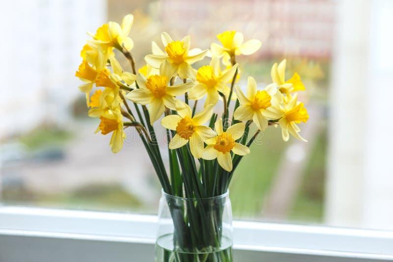 Fondo di pasqua della primavera con i narcisi nel secchio sulla finestra Fiori gialli del narciso o del narciso fotografia stock libera da diritti