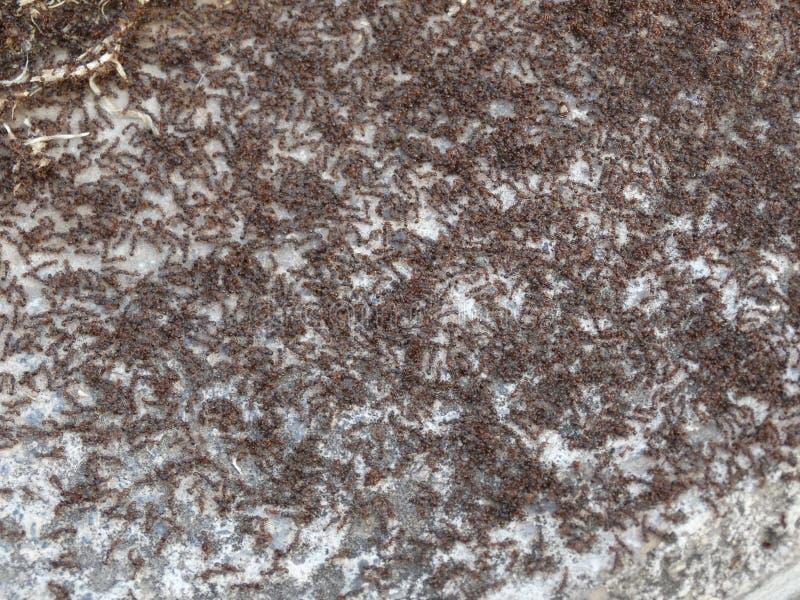 Fondo di piccole formiche immagine stock libera da diritti