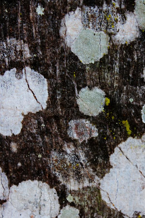 Fondo di pietra reale di struttura grigio Legno Superficie della roccia st grigia fotografia stock