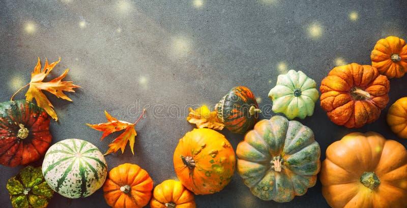 Fondo di ringraziamento con le vari zucche, zucche e fallin fotografia stock libera da diritti