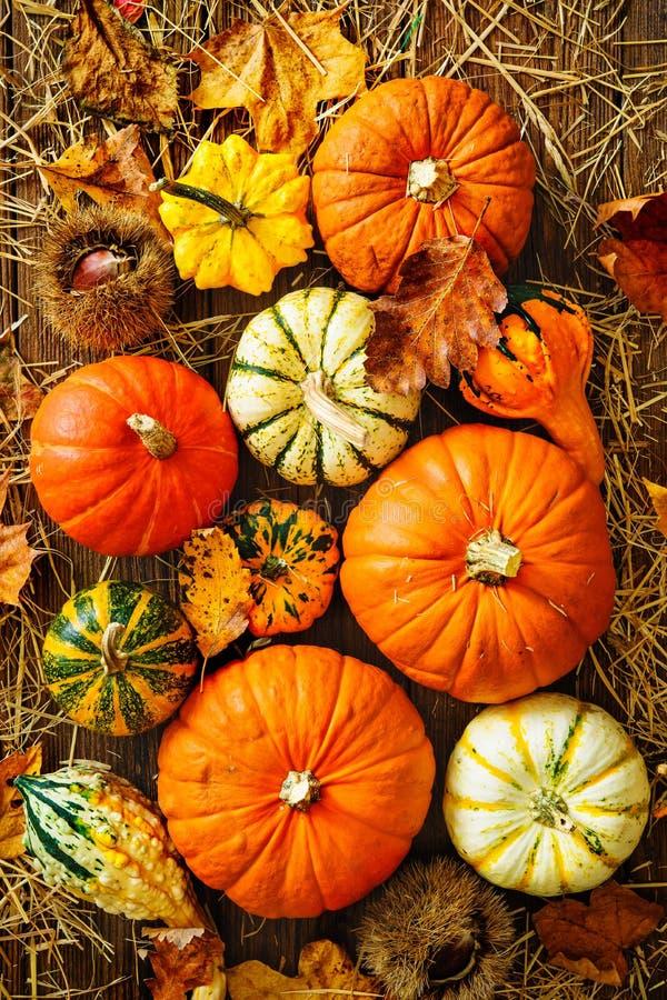 Fondo di ringraziamento o del raccolto con le zucche e la paglia immagine stock
