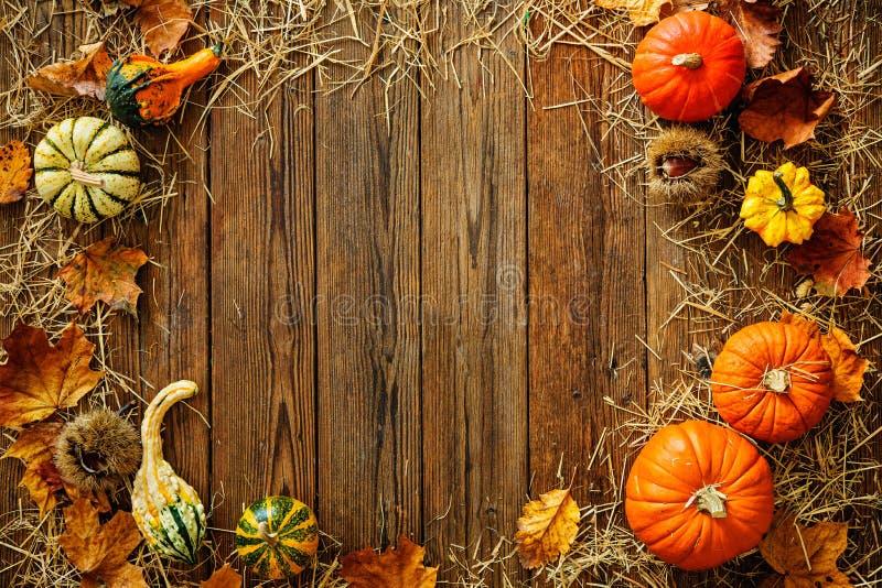 Fondo di ringraziamento o del raccolto con le zucche e la paglia immagini stock