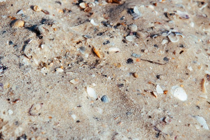 Fondo di sabbia di mare con le conchiglie sulla spiaggia del mare, oceano con le onde fotografia stock libera da diritti