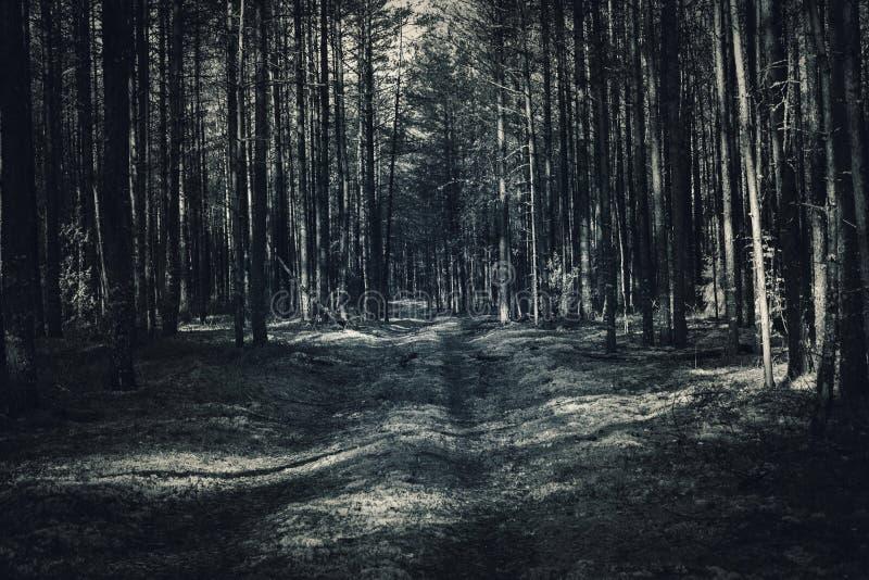 Fondo di scena della foresta di colore leggero del blu di turchese di fantasia immagine stock libera da diritti