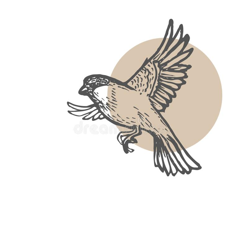 Fondo di schizzo degli uccelli del passero Illustrazione disegnata a mano della pittura Linea disegno di arte illustrazione vettoriale