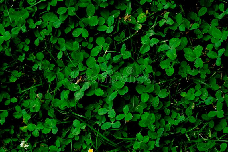 Fondo di struttura del fondo dell'erba verde fotografia stock