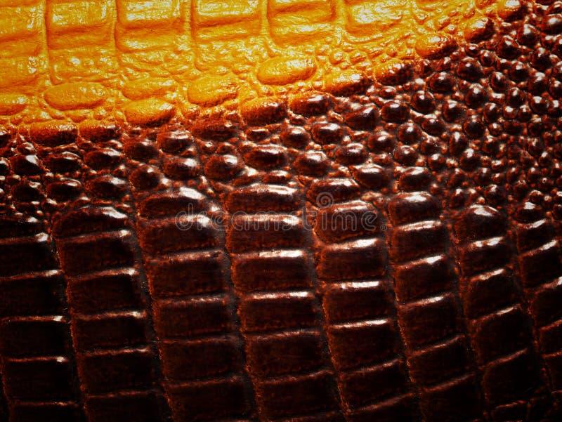 Fondo di struttura della pelle del coccodrillo fotografia stock libera da diritti