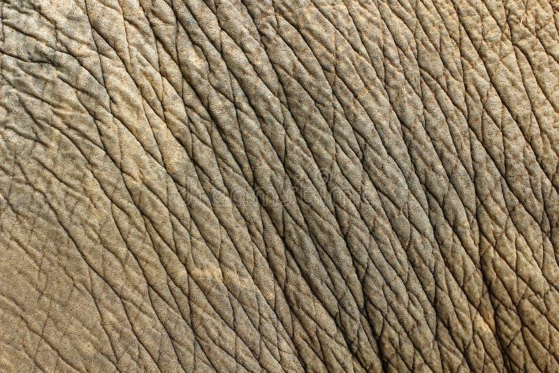 Fondo di struttura della pelle dell'elefante fotografia stock libera da diritti