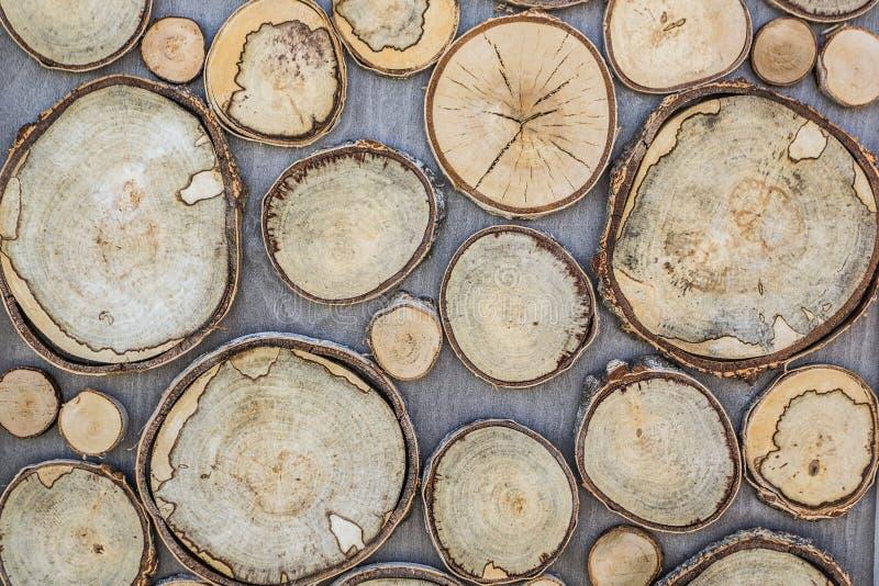 Fondo di struttura di legno, forma rotonda, che sono scolpiti da un grande e piccolo albero Crepe, anelli annuali, corteccia Prog fotografia stock libera da diritti