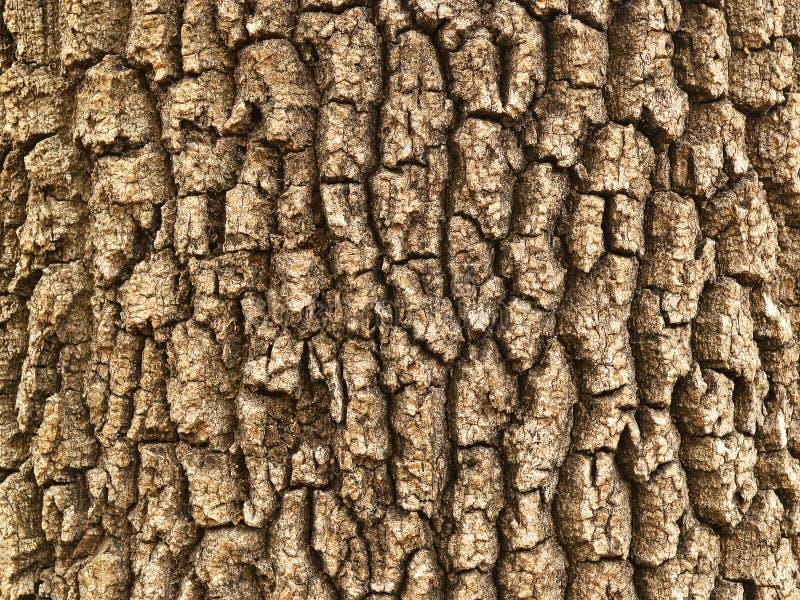 Fondo di una corteccia ruvida con le crepe profonde, struttura del vecchio albero fotografie stock libere da diritti