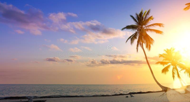 Fondo di vacanze estive di arte; Palma su un tramonto tropicale della spiaggia fotografie stock libere da diritti