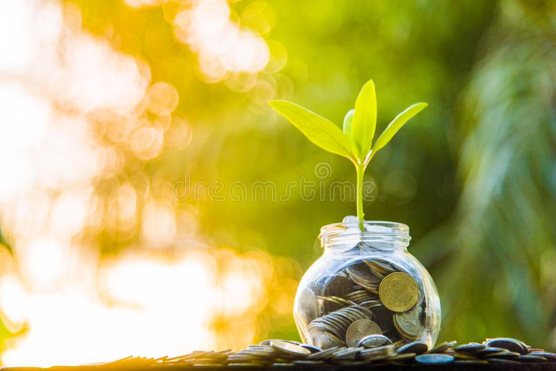 Fondo di verde dell'albero di crescita con finanza e crescita nere dell'argilla immagini stock libere da diritti