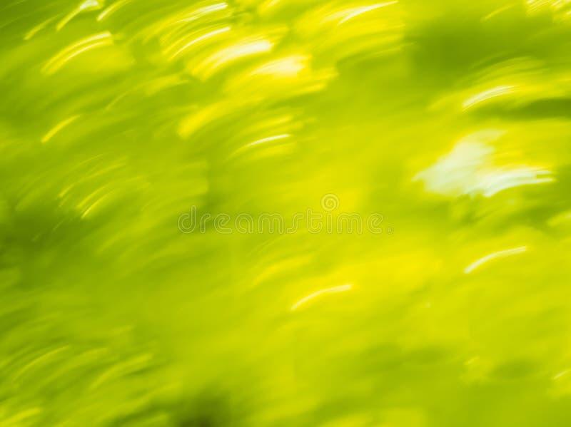 Fondo dinamico del bokeh di estate fotografie stock