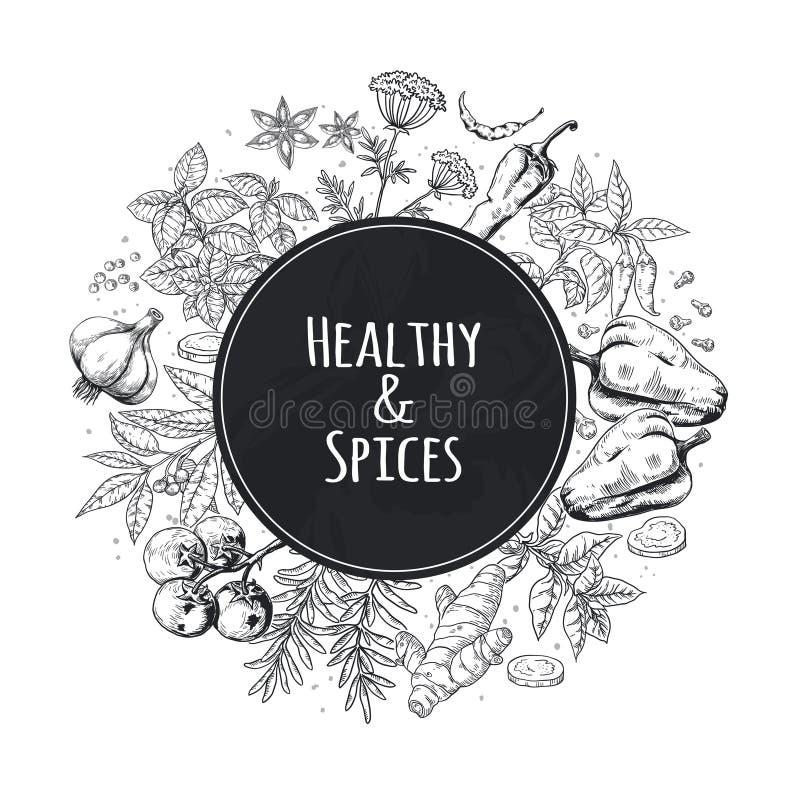 Fondo disegnato a mano delle spezie Erbe dell'alimento e spezie asiatiche ed indiane, elementi gastronomici di schizzo del menu C illustrazione vettoriale
