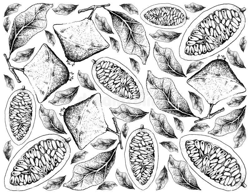 Fondo disegnato a mano di Cambuci e della banana Passionfruit illustrazione di stock