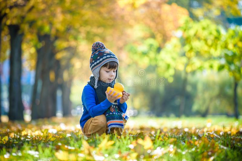 Fondo dorato di autunno con le foglie di caduta ed il piccolo ragazzo del bambino che giocano nel fogliame autunnale Godere felic fotografia stock