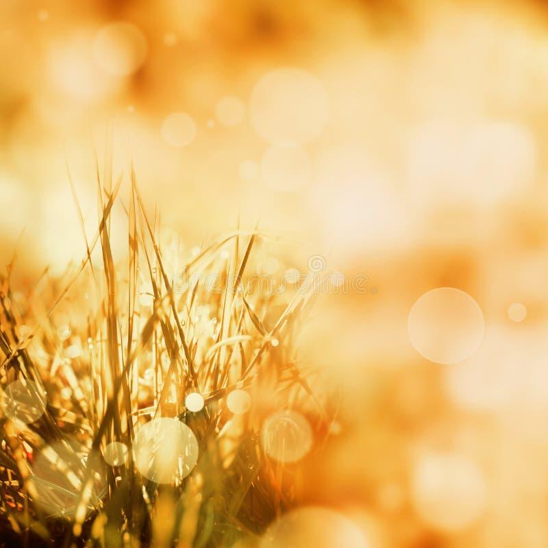 Fondo dorato radiante di autunno fotografie stock libere da diritti