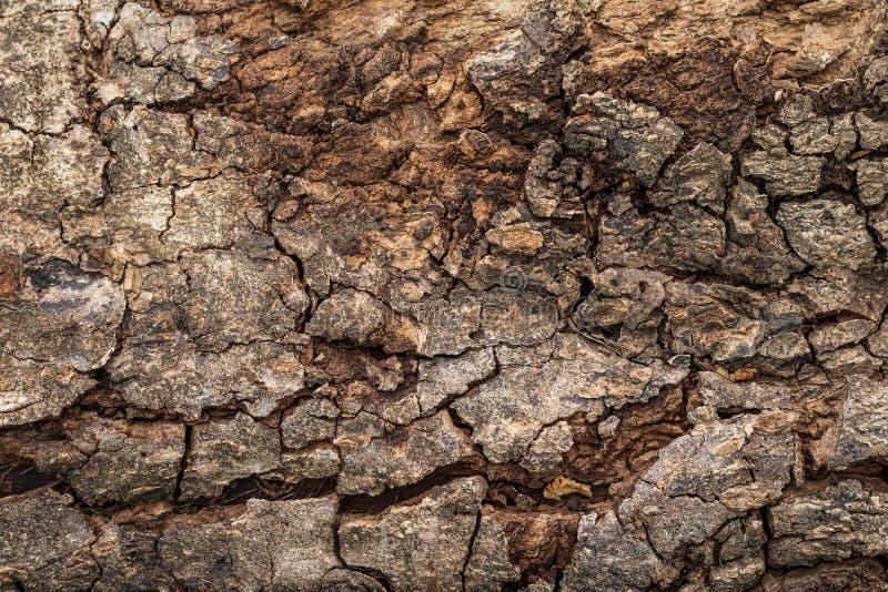 Fondo duro de la textura de la corteza de madera o de árbol con la superficie áspera y el modelo natural Detalle del material de  imagen de archivo libre de regalías