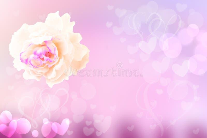 Fondo en colores pastel festivo del extracto de la flor Un flor color de rosa blanco fotos de archivo