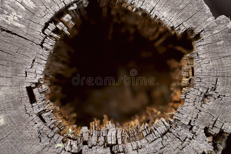 Fondo enmascarado extracto Opinión desde arriba sobre un hueco en un árbol imagenes de archivo