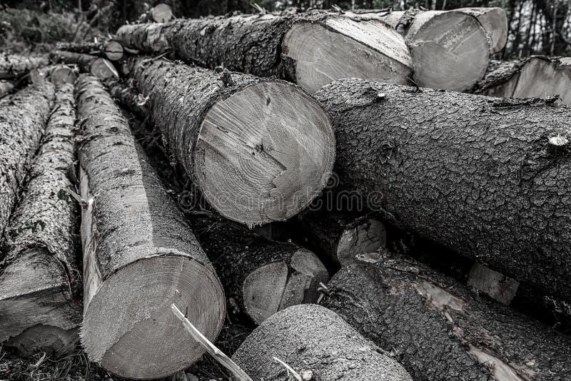Fondo entonado árboles grandes largos de los troncos de árbol Base del diseño de una pila de derribo del bosque de construcción d imagenes de archivo