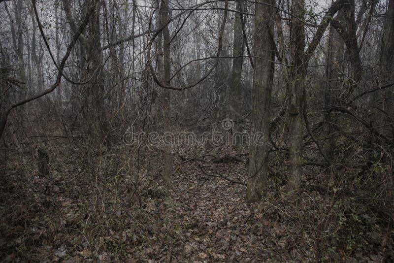 Fondo espeluznante del bosque fotos de archivo