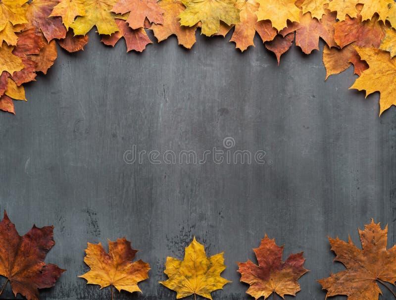 Fondo estacional del oto?o Capítulo de hojas de arce coloridas imagenes de archivo