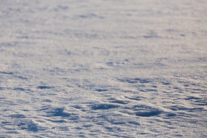 Fondo estacional llano distante de la textura del campo de nieve con el foco selectivo imágenes de archivo libres de regalías