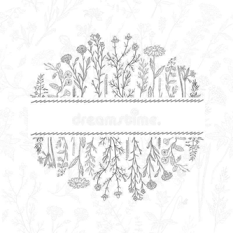 Fondo exhausto de las hierbas y de las flores de la mano Lugar para el texto stock de ilustración