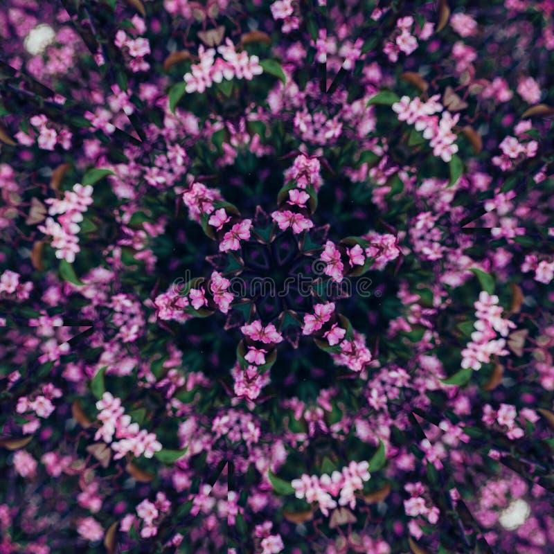 Fondo floral abstracto, flores rosadas con efecto del caleidoscopio imagen de archivo libre de regalías